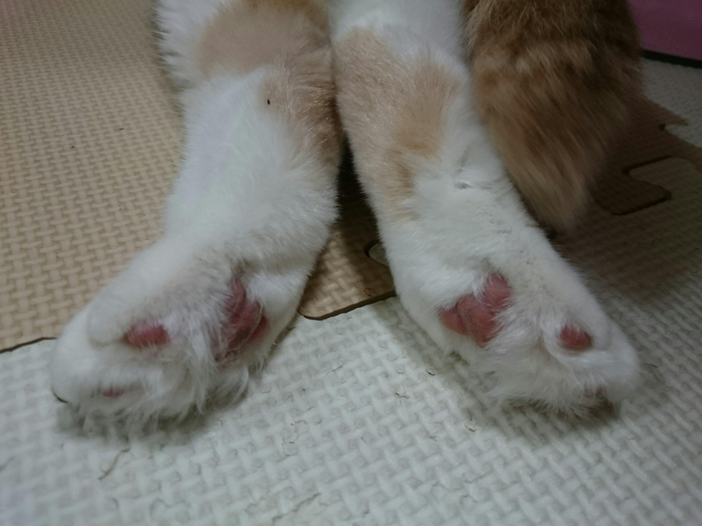 うちのネコの足