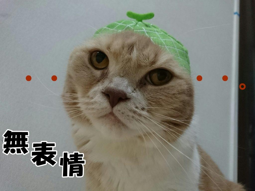なんとも言えない表情のうちのネコ