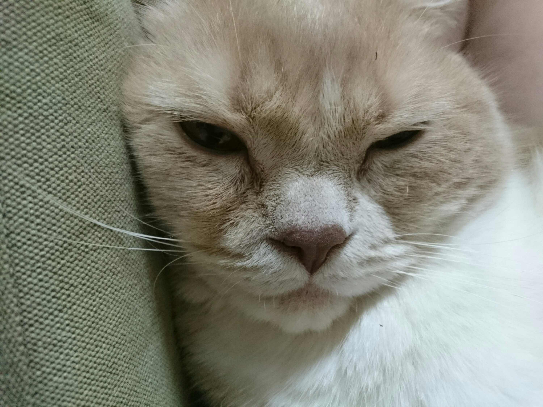 うちのネコ
