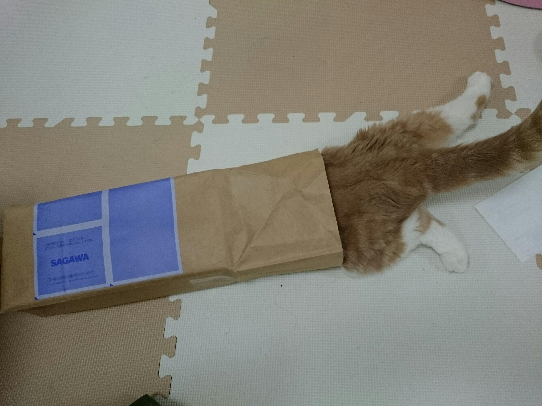 うちのネコ紙袋に突入