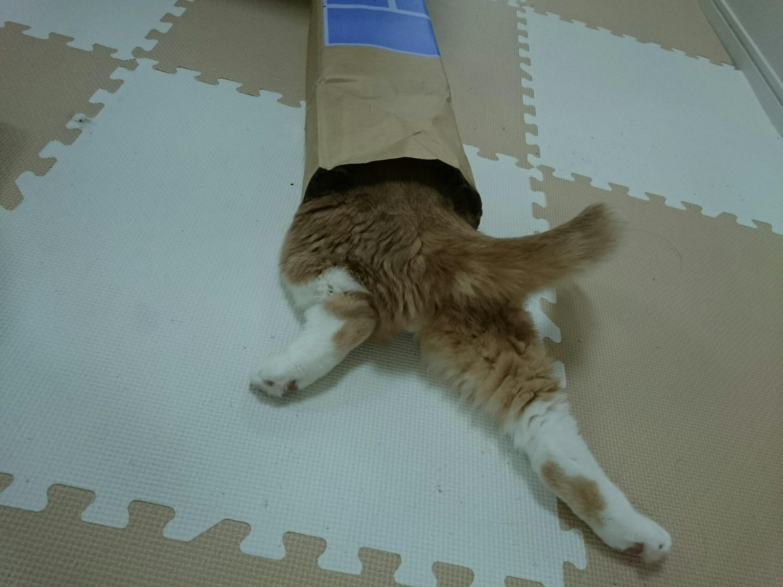 紙袋からはみ出たネコのおしり